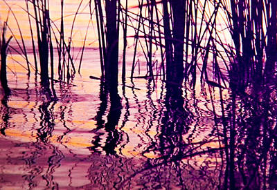 Sunset Cattails Poster by Christy Usilton