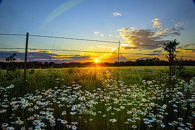 Sunset Daisies Poster by Jean Hutchison