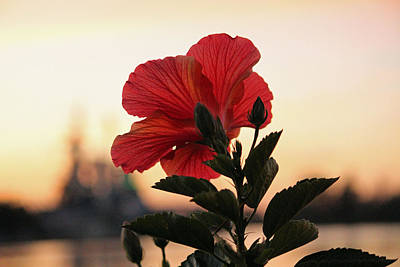 Poster featuring the photograph Sunset Flower by Cynthia Guinn