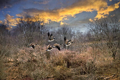 Sunset Geese Poster by Christina Rollo