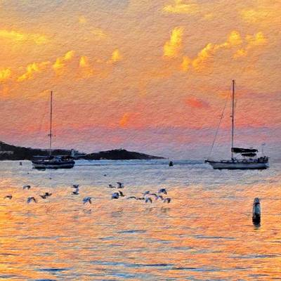 Sunset Harbor With Birds - Square Poster