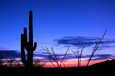 Poster featuring the photograph Sunset In Saguaro National Park by Elizabeth Budd