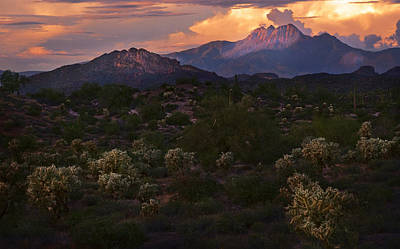 Sunset Lit Cactus Over Four Peaks Poster