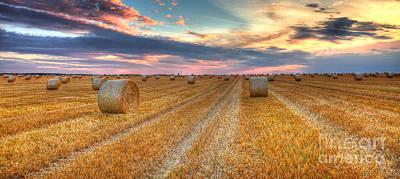 Sunset Over The Field Poster by Radu Razvan