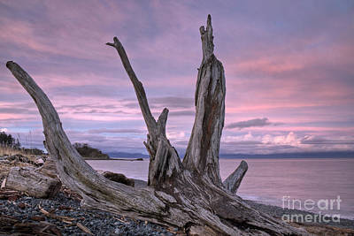 Poster featuring the photograph Sunset Over The Salish Sea by Inge Riis McDonald