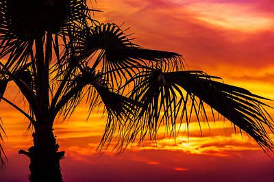 Sunset Palm Tree Poster by John Georgiou