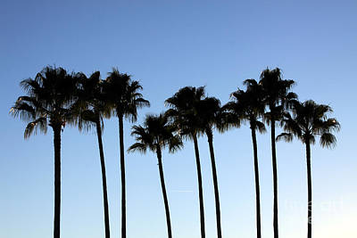 Poster featuring the photograph Sunset Palms by Chris Thomas