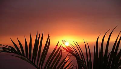 Sunset Palms Poster by Karen Nicholson