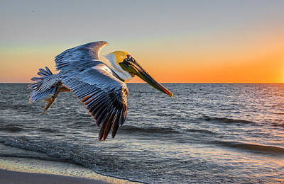Poster featuring the photograph Sunset Pelican by Brian Tarr