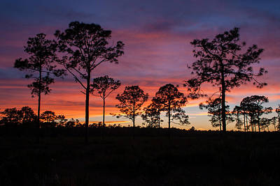 Poster featuring the photograph Sunset Pines by Paul Rebmann