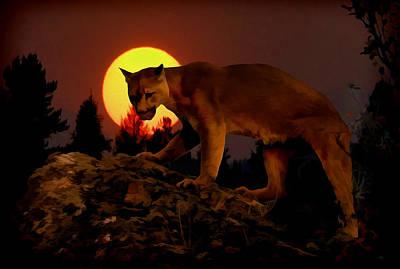 Sunset Predator Poster by Wade Aiken