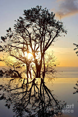 Sunset Silhouette And Reflections Poster by Kaye Menner