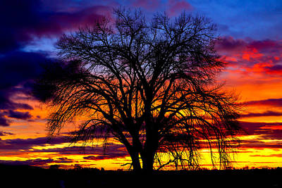 Poster featuring the photograph Sunset Silhouette by Greg Norrell