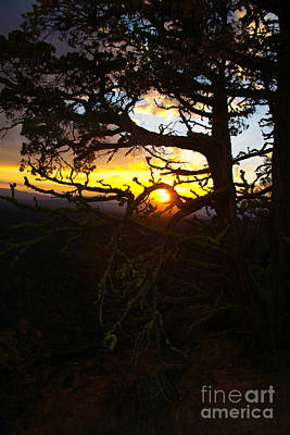 Sunset Through Branch Poster by Jane Axman