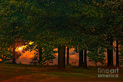Sunset Through The Forest Poster by Tom York Images
