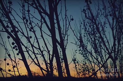 Sunset Through The Trees Poster by Jennifer Ramirez