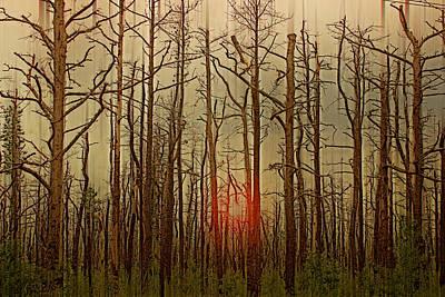 Sunset Thru The Pine Barrens Poster