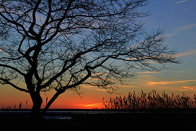 Poster featuring the photograph Sunset Tree In Ocean City Md by Bill Swartwout