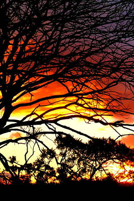 Sunset Tree Silhouette Poster by The Creative Minds Art and Photography