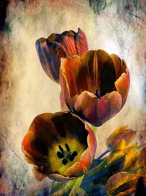Sunset Tulips Poster