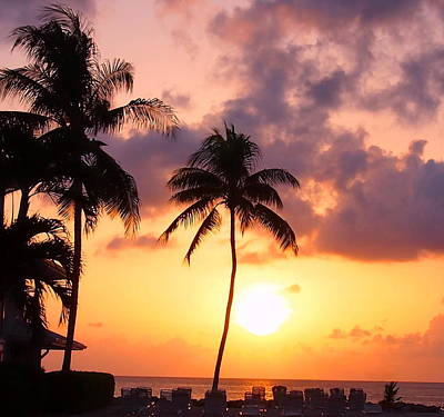 Sunsets And Palm Trees Poster by Amy McDaniel