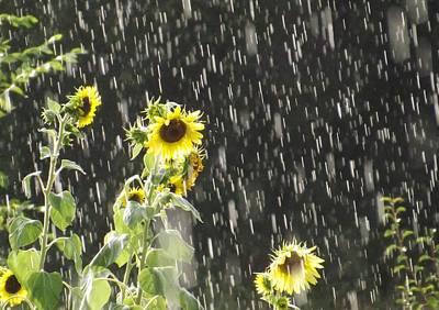 Sunshine In The Rain 2 Poster by Elizabeth Sullivan