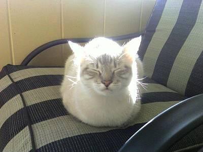 Sunshine Kitty Poster