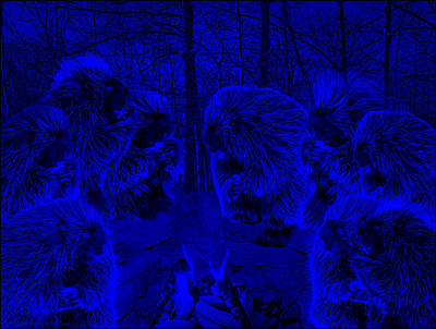 Super Blue Picky Eaters In The Moonlight Poster by LeeAnn McLaneGoetz McLaneGoetzStudioLLCcom