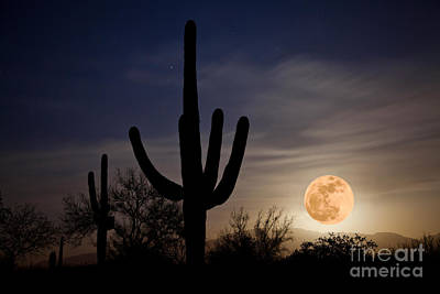Super Moon Over Sonoran Desert Poster by Richard and Ellen Thane