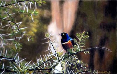 Superb Starling Poster