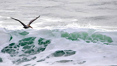 Poster featuring the photograph Surf N Pelican by AJ  Schibig
