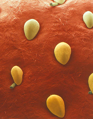 Surface Of Strawberry Fruit Poster