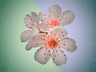 Surreal Sakura - Close Up Floral Fine Art Photography Poster