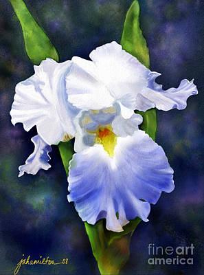Susan's Blue Iris Poster by Joan A Hamilton