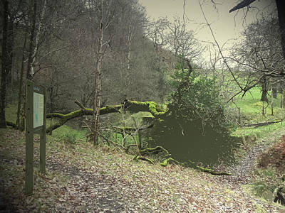 Swallows Wood, Nature Reserve Situated On The Site Poster