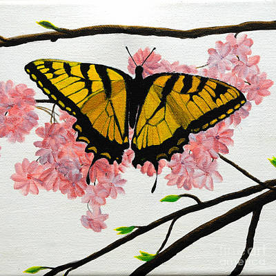 Swallowtail In Cherry Blossoms Poster