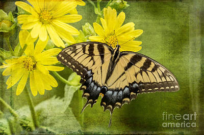 Poster featuring the photograph Swallowtail by Vicki DeVico