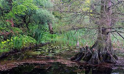 Swamp Garden Poster