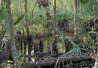Swamp Scenery Poster by Kenneth Albin
