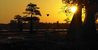 Poster featuring the photograph Swamp Sunrise by Silke Brubaker