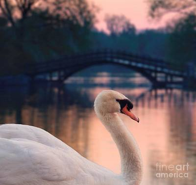 Swan Bridge Poster by Henry Kowalski