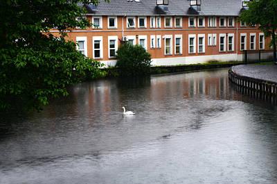 Swan In Dublin Poster