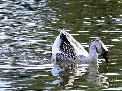 Swan Lake Digital Art Poster by Robyn King