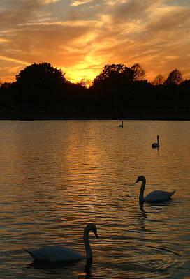 Swan Lake Poster by John Topman