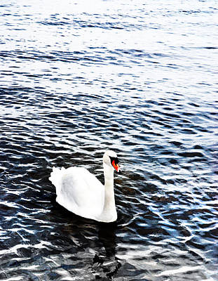 Swan Poster by Mark Rogan