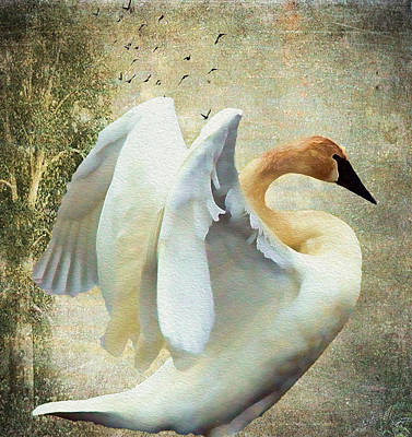 Swan - Summer Home Poster by Kathy Bassett