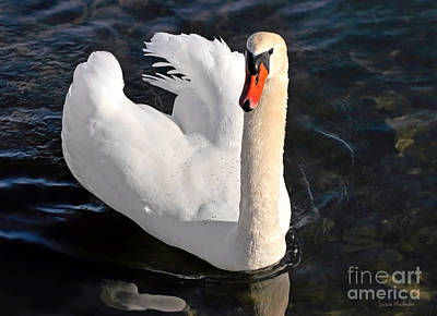 Swan With A Golden Neck Poster by Susan Wiedmann