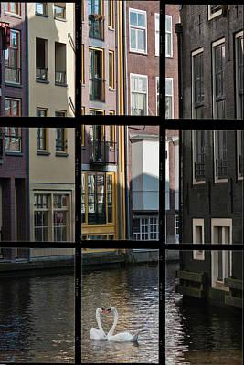 Swans Love Amsterdam Poster