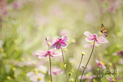 Sweet Butterfly Garden Poster