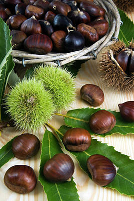 Sweet Chestnuts (castanea Sativa Poster